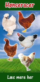 Beskrivelse af hønseracer