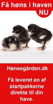 Kyllinger til salg